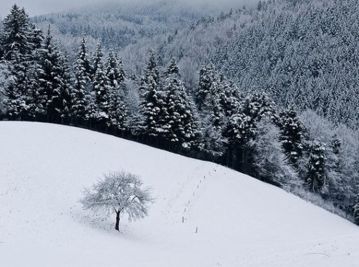 exiled-snowy-view-happy-winter
